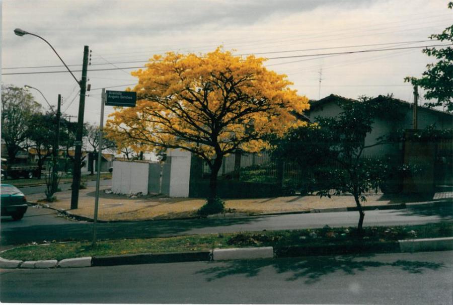 Avenida Ângelo Simões. Acervo