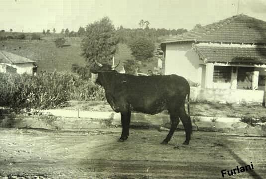 Rua Americana, no Jardim Campos Elíseos em 1952.   Coleção particular de BRUNO FURLANI.